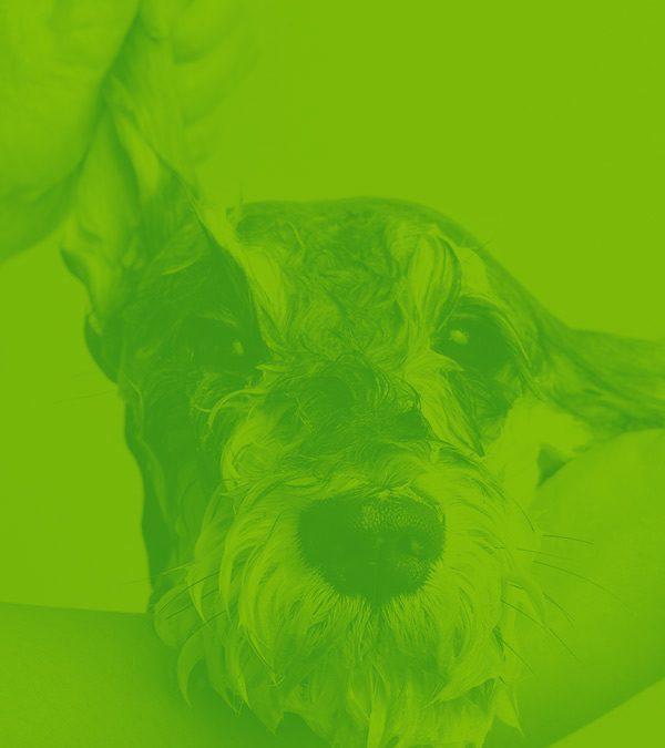 Award-winning dog grooming company develops new growth channel